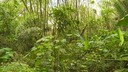 HD2009-11-12-46 jungle Footage