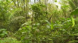 HD2009-11-12-46 jungle Stock Video Footage