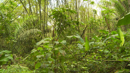 HD2009-11-12-46 jungle Stock Video Footage