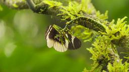 HD2009-11-12-48 butterflies jungle Stock Video Footage