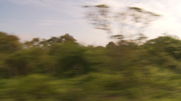 HD2009-11-13-16 drive along Ecuadoran bush country Stock Video Footage