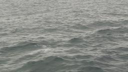 HD2009-11-14-12 porpose at sea Stock Video Footage
