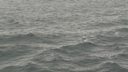 HD2009-11-14-12 porpose at sea Footage