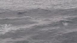HD2009-11-14-14 porpose at sea Stock Video Footage