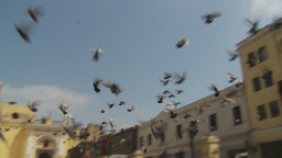 HD2009-11-16-20 pidgeions fly Stock Video Footage
