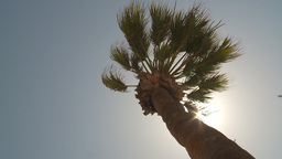 HD2009-11-18-13 windy palm sun in out Stock Video Footage