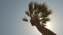 HD2009-11-18-13 windy palm sun in out Footage