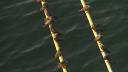 HD2009-11-19-3 birds on anchor line Stock Video Footage