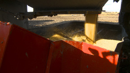HD2009-10-6-28 grain truck mustard seed into auger Stock Video Footage