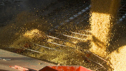 HD2009-10-6-30 grain truck mustard seed into auger shutter Stock Video Footage