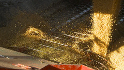 HD2009-10-6-30 grain truck mustard seed into auger shutter Stock Video Footage