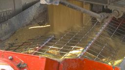 HD2009-10-6-33 grain truck mustard seed into auger to seed bin Footage