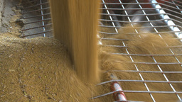HD2009-10-6-35 grain truck mustard seed into auger Stock Video Footage