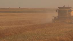 HD2009-9-32-10 grain harvest combines Stock Video Footage