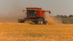 HD2009-9-32-12 grain harvest combines Stock Video Footage