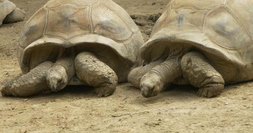 tortoise 4k 01 Footage