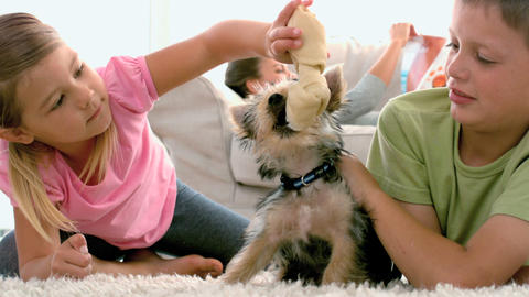 Siblings Playing With Puppy And Bone stock footage