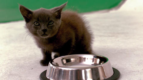 Kitten Sitting Beside Bowl Of Milk stock footage