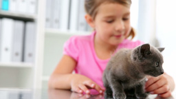 Little girl stroking a grey kitten Footage