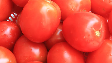The red ripe tomatoes Footage