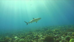 Under Water Stock Footage, Live Action