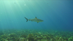 Under Water Stock Footage Live Action