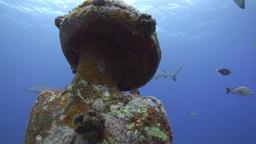 Underwater Diving Footage