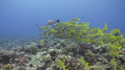 Underwater Footage stock footage