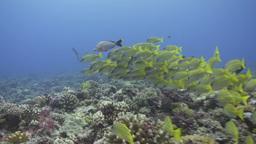 Underwater Footage Footage