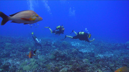 Under Water Stock Footage stock footage