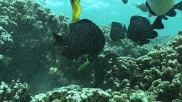 Underwater Stock Footage, Live Action
