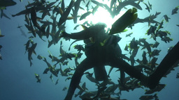 Underwater Stock Footage Live Action