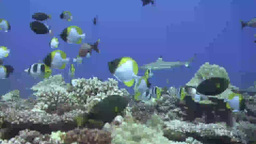Underwater Stock Footage Footage