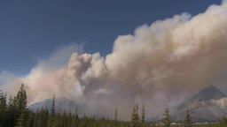 HD2009-9-37-2 Forest fire heavy smoke TL Stock Video Footage