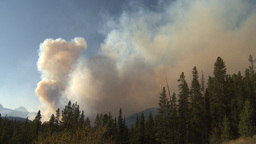 HD2009-9-38-5 forest fire TL Stock Video Footage