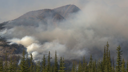 HD2009-9-39-15 forest fire heavy smoke Stock Video Footage