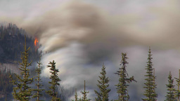 HD2009-9-39-17 forest fire heavy smoke TL surreal Stock Video Footage