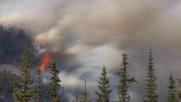 HD2009-9-39-17 forest fire heavy smoke TL surreal Footage