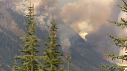 HD2009-9-40-3 forest fire thru trees Footage