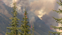HD2009-9-40-3 forest fire thru trees Stock Video Footage