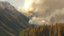 HD2009-9-40-9 forest fire Stock Video Footage