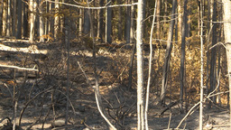 HD2009-9-40-15 forest fire after scorched Stock Video Footage
