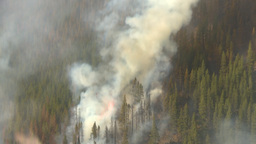 HD2009-9-40-19 forestfire incockpit snap zoom Stock Video Footage