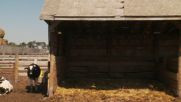 HD2009-9-41RC-2 dairy cows and stable Stock Video Footage
