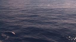 HD2008-8-13-25 ship wake Stock Video Footage