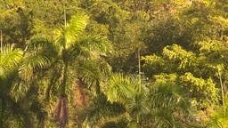 HD2008-8-14-49 San Juan palms breeze Stock Video Footage