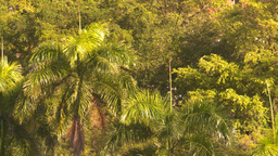 HD2008-8-14-49 San Juan palms breeze Footage