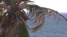 HD2008-8-14-69 San Juan old town palms Stock Video Footage
