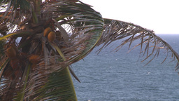 HD2008-8-14-69 San Juan old town palms Footage
