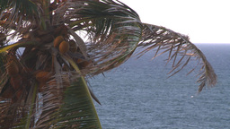 HD2008-8-14-69 San Juan old town palms Stock Video Footage